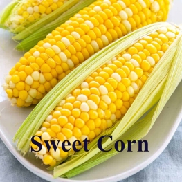 This image has an empty alt attribute; its file name is sweet_corn.jpg